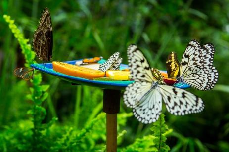 Schmetterlingshaus im egapark Erfurt
