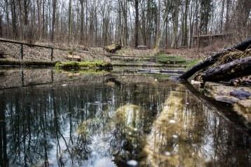 Durch den Steigerwald mit Revierförsterin Uta Krispin. Foto: Bild13