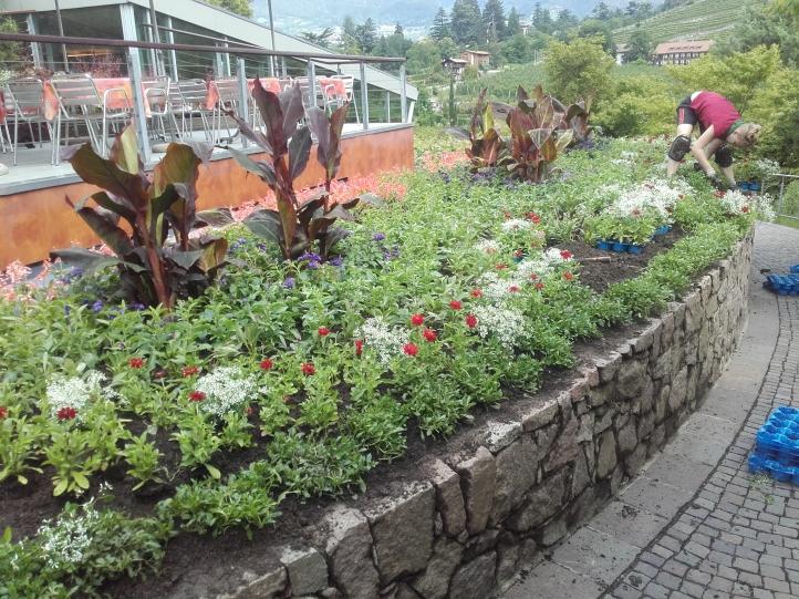 Pflanzen...