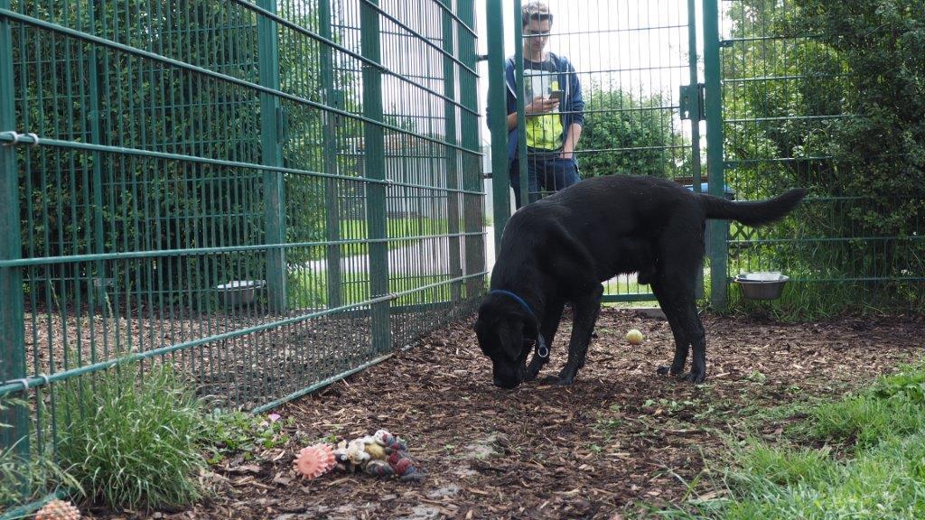 Zwiegespräch mit Labrador