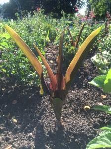 Ananasblume2