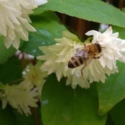 Bienen: Der ultimative Überblick