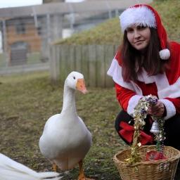 Tierische Weihnachten im Andreasried