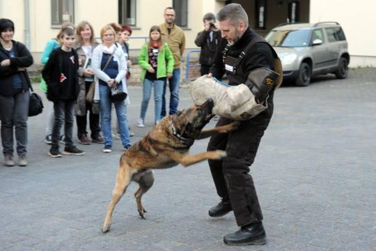 Auch die Polizeihunde waren im Einsatz.