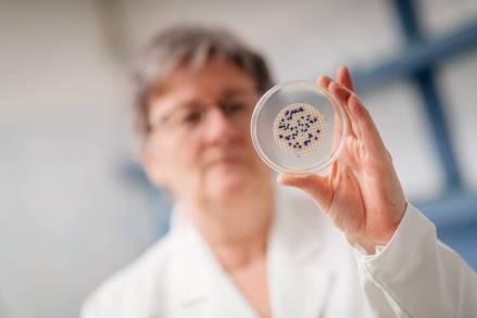 Prüfung der Bakterienkultur