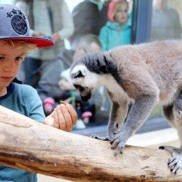 Zoopark Erfurt exklusiv: Auge in Auge mit Kattas