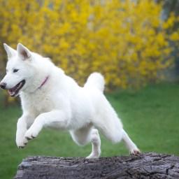 Tipps rund um den Fellwechsel des Hundes