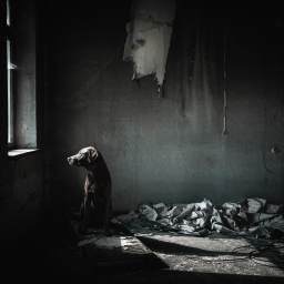 Vergessene Orte – unvergessene Hundefotos