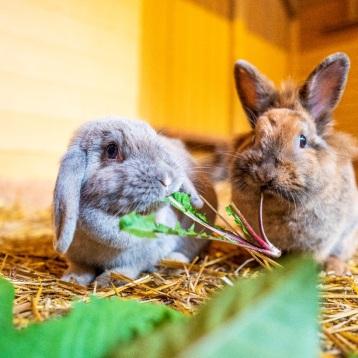 Kaninchen auf dem Kinderbauernhof (Foto: Jacob Schröter)