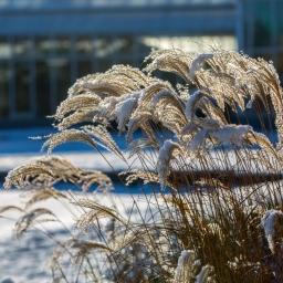 Gartentipps für den Winter